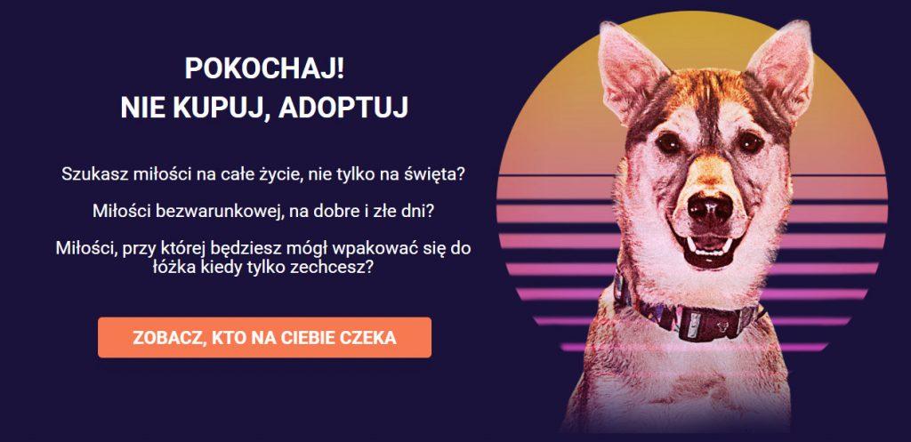 Fundacja Głosem Zwierząt