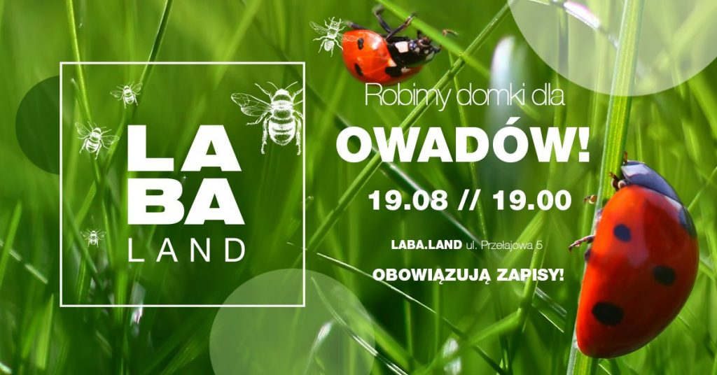 Robimy domki dla owadów #2 Kreatywna Środa w Laba.Land