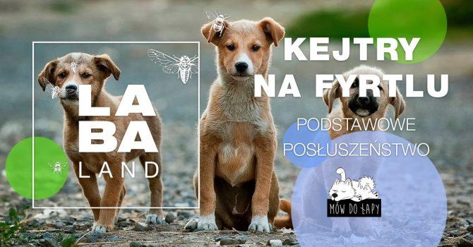Kejtry na fyrtlu | kurs dla psów