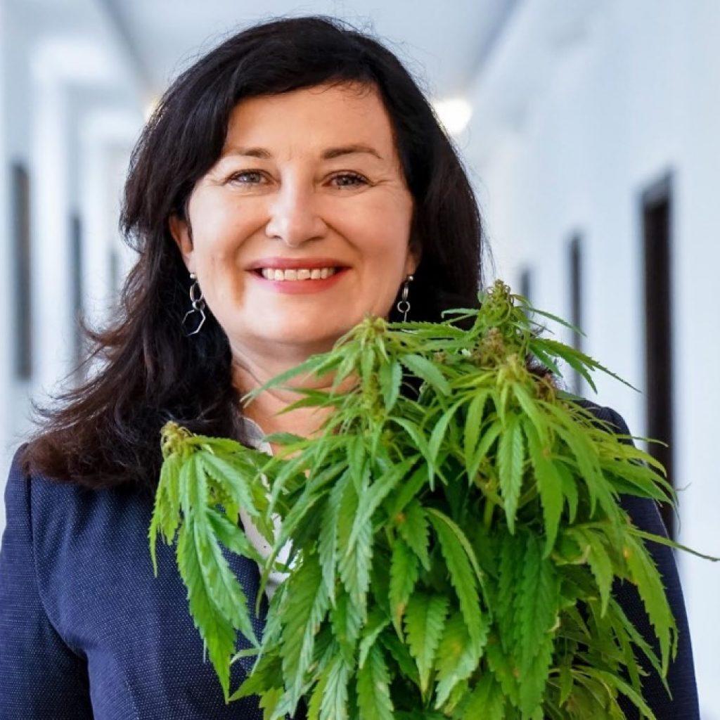 Marihuana legalna w Polsce ustawa