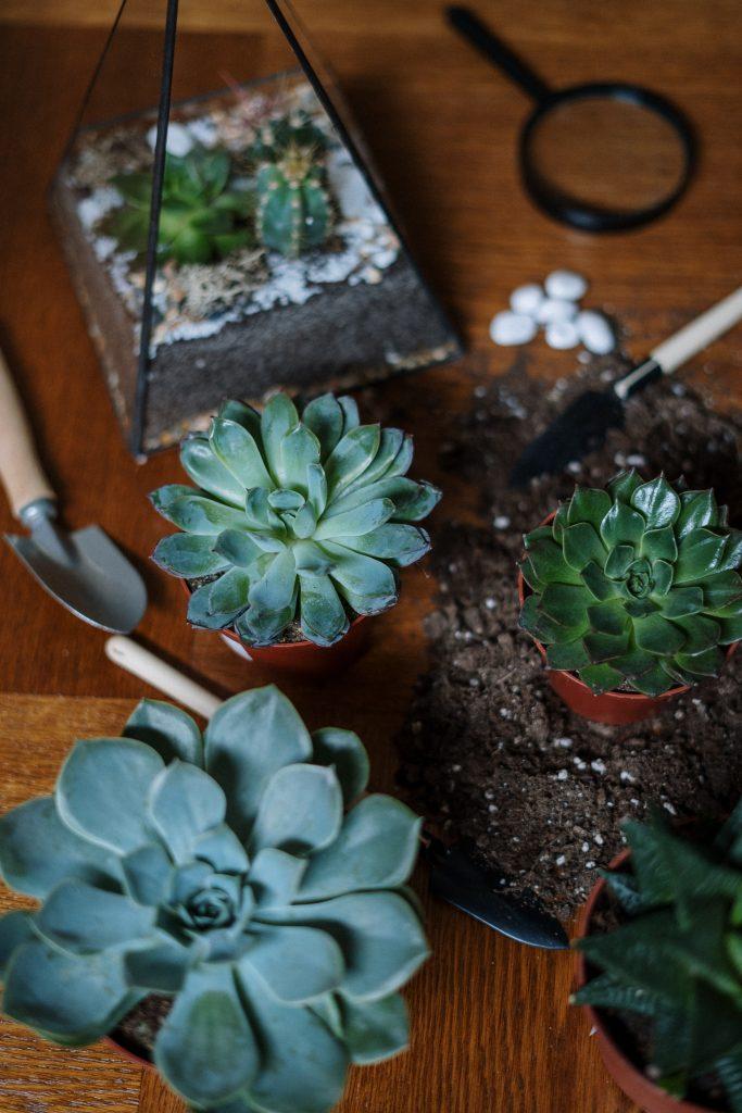 muzyka dla roślin