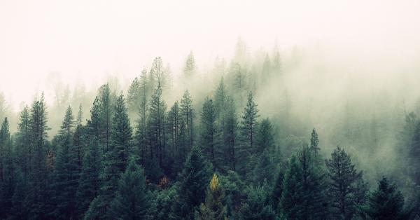 Dzień Ziemi nie trwa tylko dziś. Zrównoważona moda dla planety