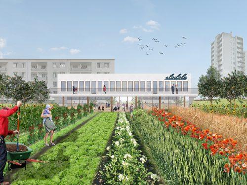 Wieś w centrum miasta. Oto nowy pomysł na farmę w Krakowie!