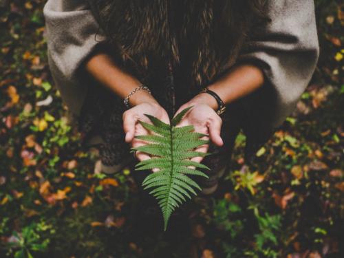 Monstera, Pilea, Sansewieria… Te rośliny powinny znaleźć się w domu każdego hipstera.
