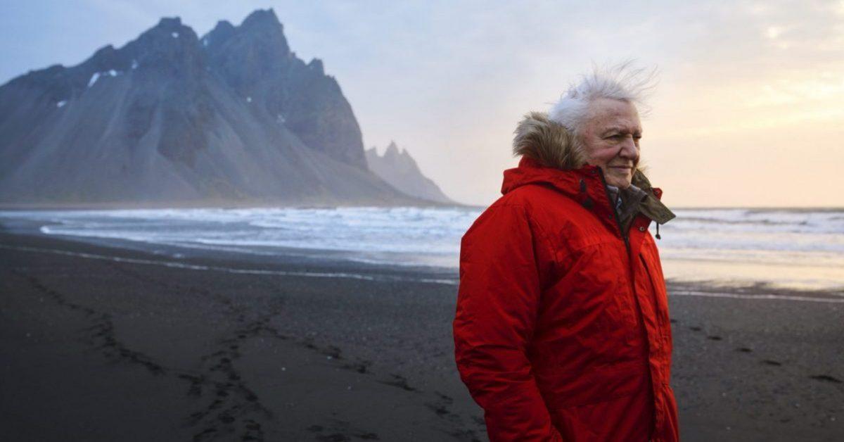 """David Attenborough zapowiada nową serię przyrodniczą """"A Perfect Planet"""""""