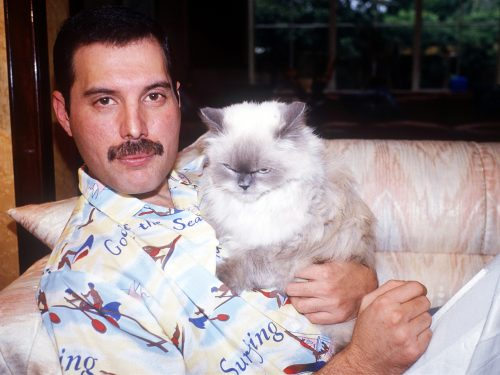 Freddie Mercury miał totalnego świra na punkcie kotów