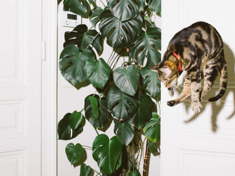 Koty potrafią latać! Koniecznie obczajcie serię Jumping Cats.