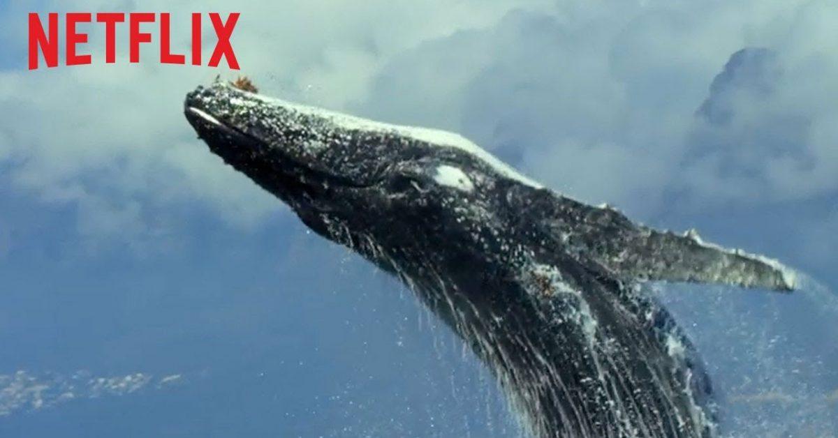 Netflix udostępnia swoje filmy dokumentalne za darmo na YouTube