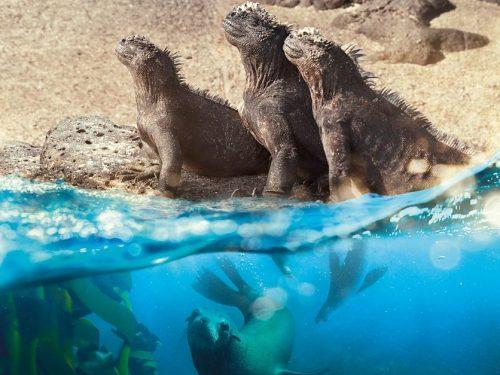 """Sir David Attenborough i Hans Zimmer łączą siły w nowym dokumencie """"Planet Earth: A Celebration"""""""
