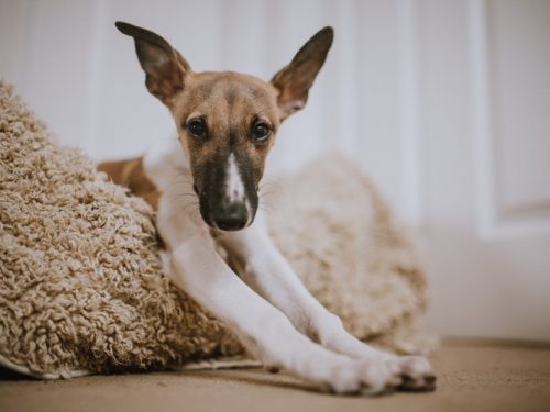 IKEA pomaga bezdomnym psom!