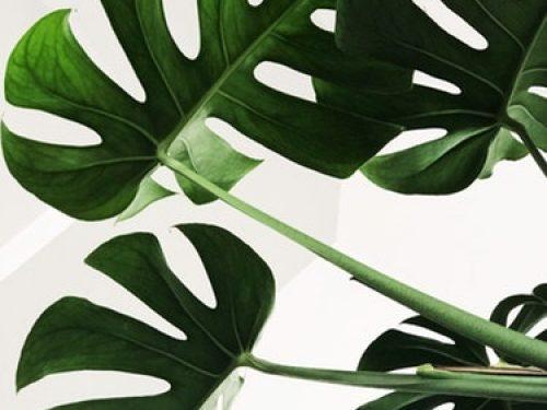 Designerskie gadżety do uprawy roślin w domu! MUST HAVE