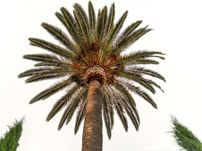 Warszawska palma uschła zaraz przed Światowym Dniem Środowiska – Rytmy.pl