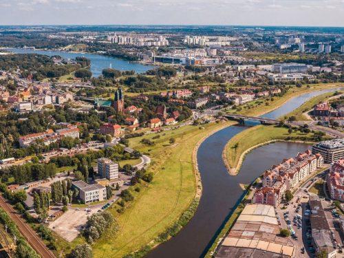 Poznań – miasto posadzi drzewa na osiedlu z najwyższą frekwencją