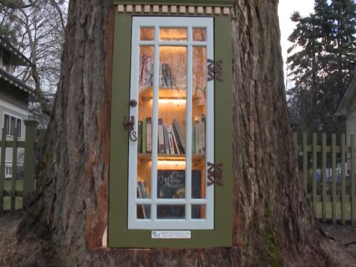 Biblioteka w ponad 100-letnim drzewie!